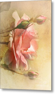 September Rose Metal Print by Elaine Manley