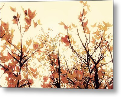 September Song Metal Print by Amy Tyler
