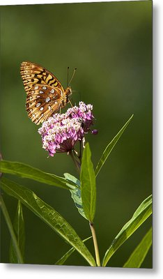 Serendipity Butterfly Metal Print by Christina Rollo