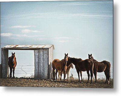 Serendipity  Metal Print by Kimberly Danner