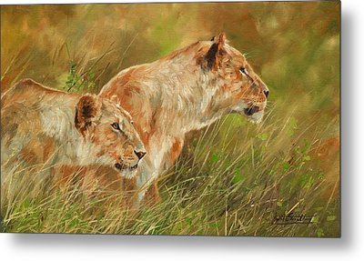 Serengeti Sisters Metal Print by David Stribbling
