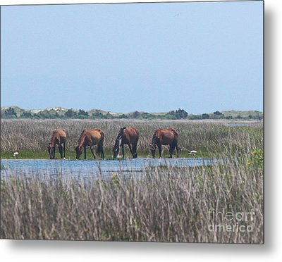 Shackleford Horses And Friends 3 Metal Print by Cathy Lindsey