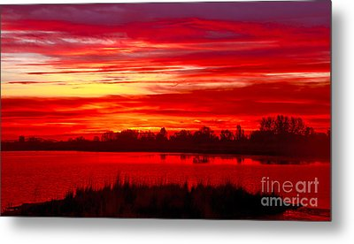 Shades Of Red Metal Print by Robert Bales