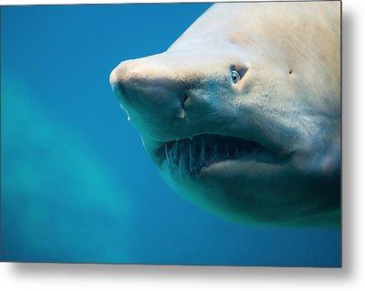 Shark Metal Print by Johan Swanepoel