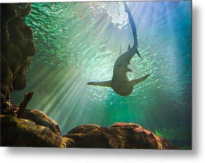 Shark Tank Metal Print by Bill Pevlor