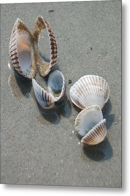 She Sells Sea Shells Metal Print by Suzanne Gaff
