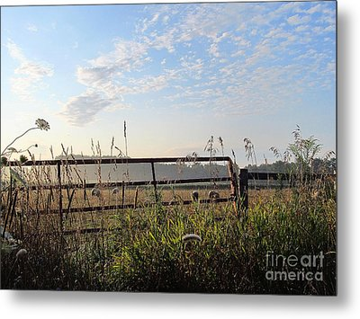 Sheep In The Meadow Metal Print by Tina M Wenger