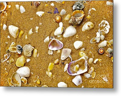 Shells In The Sand Metal Print by Kaye Menner