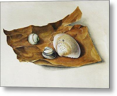 Shells On Paper Metal Print by Horst Braun