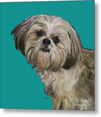 Shih Tzu On Turquoise Metal Print by Dale Moses