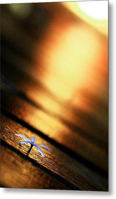Shine On Me Metal Print by Suradej Chuephanich