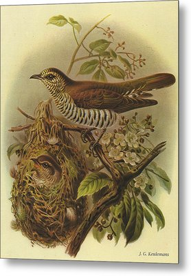 Shining Cuckoo Metal Print by J G Keulemans