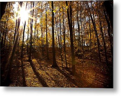 Shining Sun In The Woods Metal Print by Kamil Swiatek
