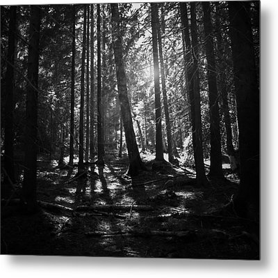 Shining Through Metal Print by Nicklas Gustafsson