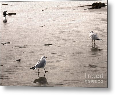 Shore Birds - 01 Metal Print by Gregory Dyer