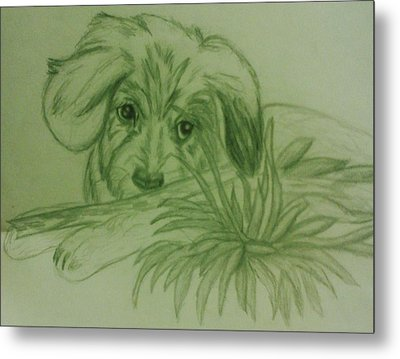 Shy Puppy Metal Print by Christy Saunders Church