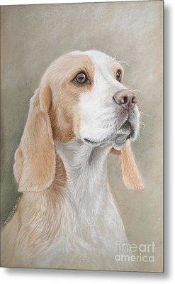 Beagle Portrait Metal Print by Tobiasz Stefaniak