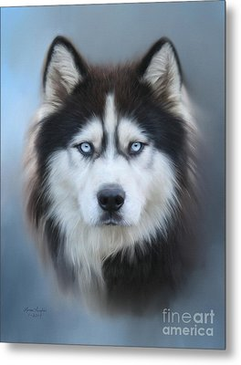 Siberian Husky Metal Print by Lena Auxier