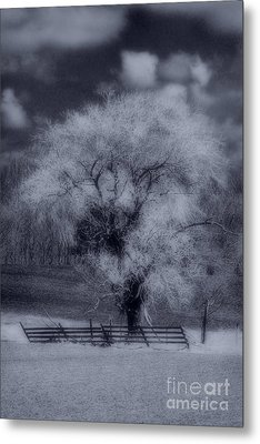 Silence Of Nature Metal Print by Cathy  Beharriell