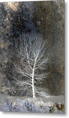 Silent Night Metal Print by Carol Leigh