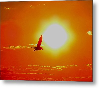Silhouetted Seagull  Metal Print by Stephen Melcher