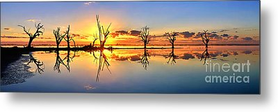 Silhouetted Sential Sunset Metal Print by Bill  Robinson