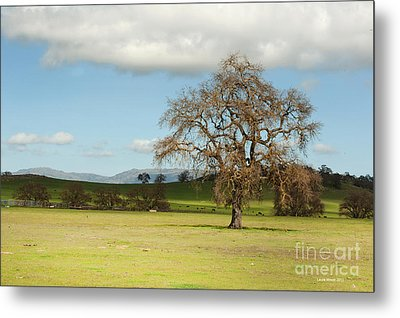Silicon Valley Hills Metal Print by Artist and Photographer Laura Wrede