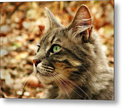 Silver Grey Tabby Cat Metal Print by Michelle Wrighton