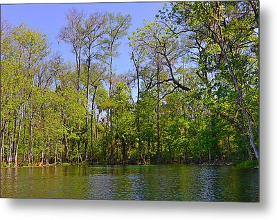 Silver River Florida Metal Print by Christine Till
