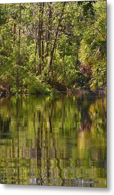 Silver Springs Nature Park Florida Metal Print by Christine Till