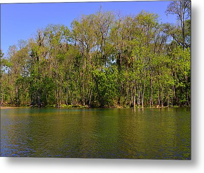 Silver Springs - Old-style Florida Metal Print by Christine Till