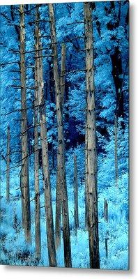 Silver Trees Metal Print by Luke Moore