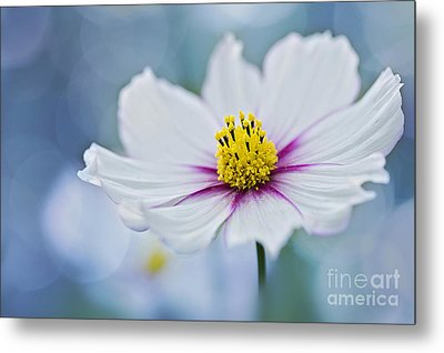 Simply Cosmos Metal Print by Jacky Parker