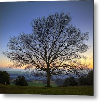 Single Bare Winter Tree Against Vibrant Sunset Metal Print by Matthew Gibson