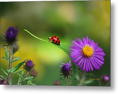 Single In Search Metal Print by Christina Rollo
