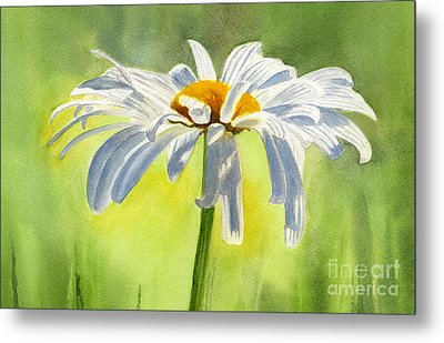 Single White Daisy Blossom Metal Print by Sharon Freeman