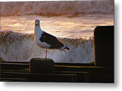 Sittin On The Dock Of The Bay Metal Print by David Dehner