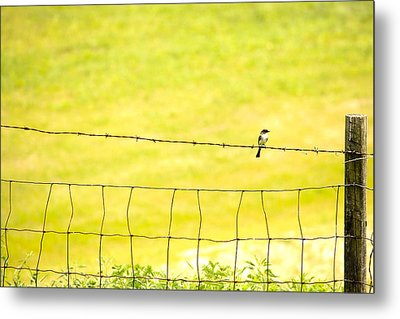 Sitting On A Wire Metal Print by Karol Livote