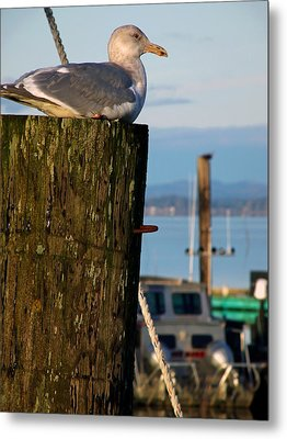 Sitting On The Dock  Metal Print by Pamela Patch