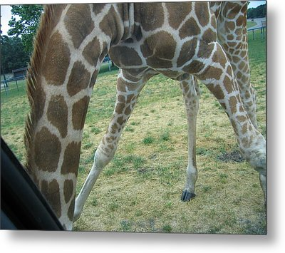 Six Flags Great Adventure - Animal Park - 121245 Metal Print by DC Photographer