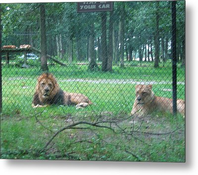 Six Flags Great Adventure - Animal Park - 121253 Metal Print by DC Photographer