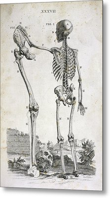 Skeleton And Giant's Leg Metal Print by British Library