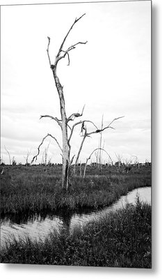 Skeleton Of The Louisiana Coast Metal Print by Andy Crawford