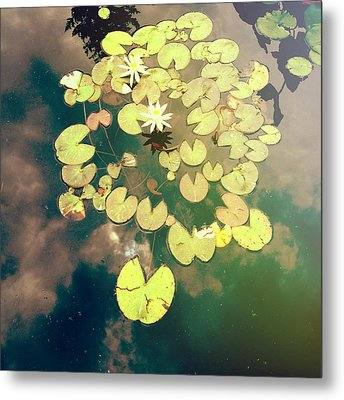 Sky Dance Metal Print by Joy StClaire