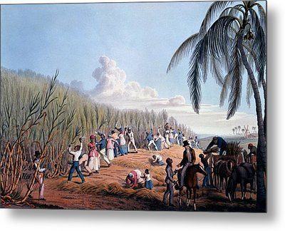 Slaves Cutting The Cane, From Ten Views Metal Print by William Clark