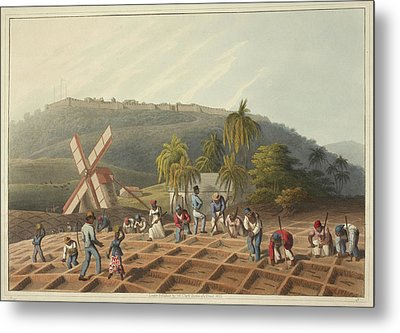 Slaves Working On A Plantation Metal Print by British Library