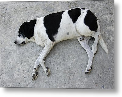 Sleeping Dog Lying On The Ground Metal Print by Matthias Hauser