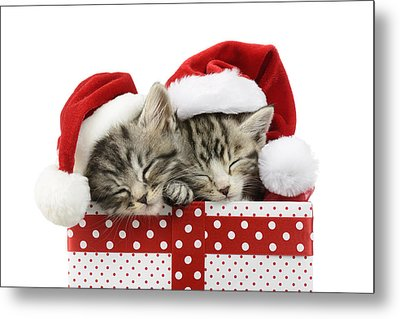 Sleeping Kittens In Presents Metal Print by Greg Cuddiford