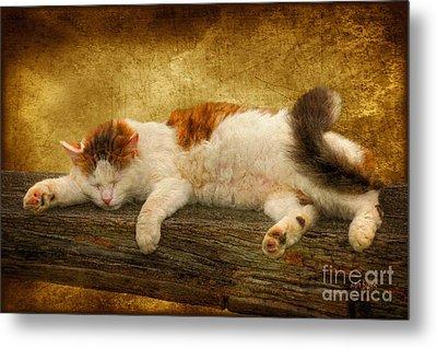 Sleepy Kitty Metal Print by Lois Bryan