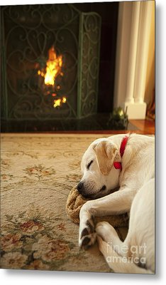 Sleepy Puppy Metal Print by Diane Diederich